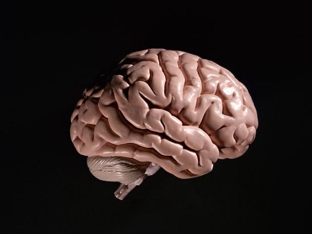 右脳と左脳のちがい